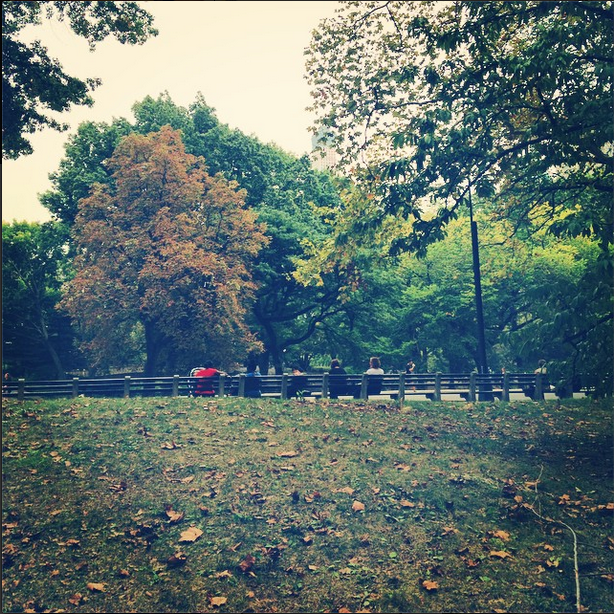 The leaves are starting to change at Central Park!