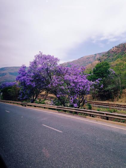 ...Spring in Southern Africa!!