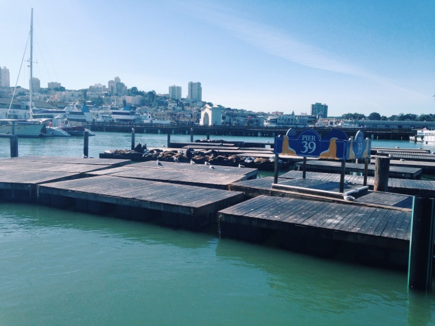Sea lions at Pier 39, Fisherman's Wharf, San Francisco
