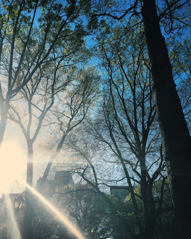 Sun shining through the trees in Union Square, New York City
