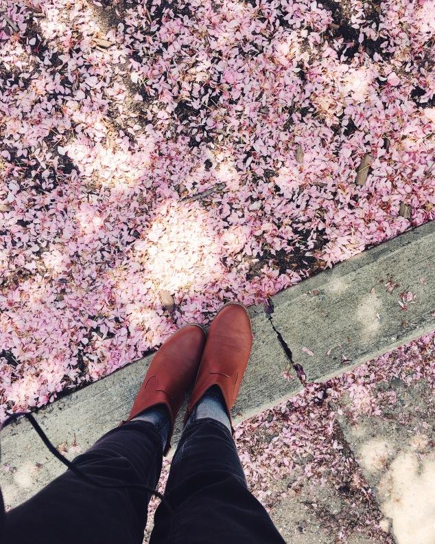 Cherry Blossoms in Greenwich Village, New York City
