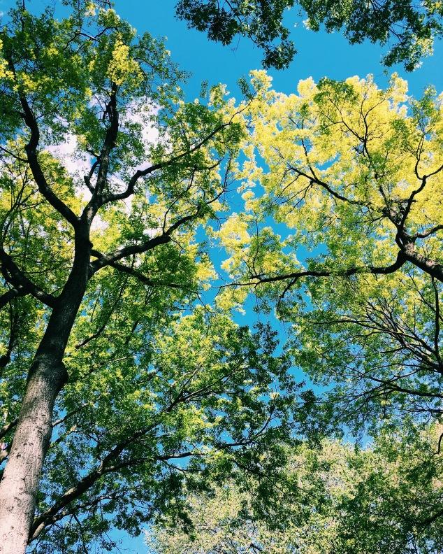 Sun shining through the trees at Union Square, New York City